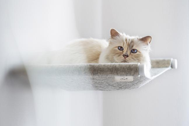 Karl Lagerfeld's cat promotes a cat's hammock