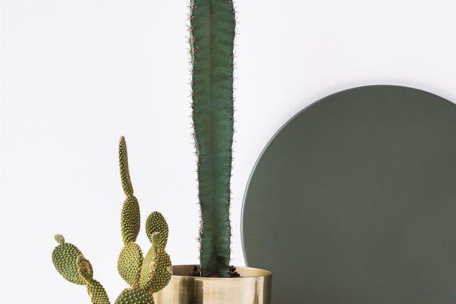Jak zaprzyjaźnić się z roślinami? - Projekt Rośliny
