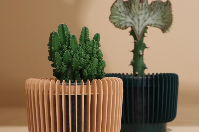 Doniczki, które twoje rośliny po prostu pokochają!