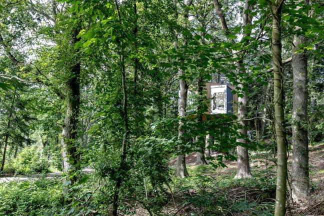 Domki zbudowane wokół drzewa