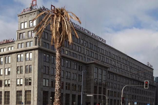 Warszawska palma uschła