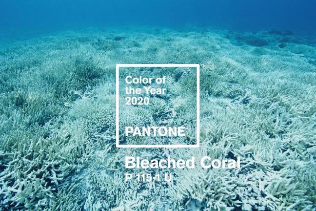 Bleached Coral kolorem roku 2020