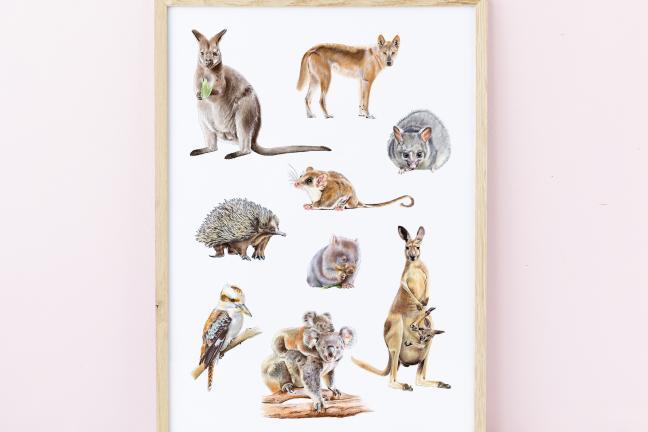 Polish illustrator creates works for Australia