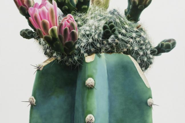 Kaktus na płótnie