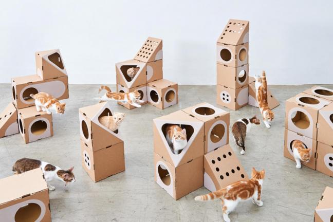 Kartonowe miasteczko dla kotów