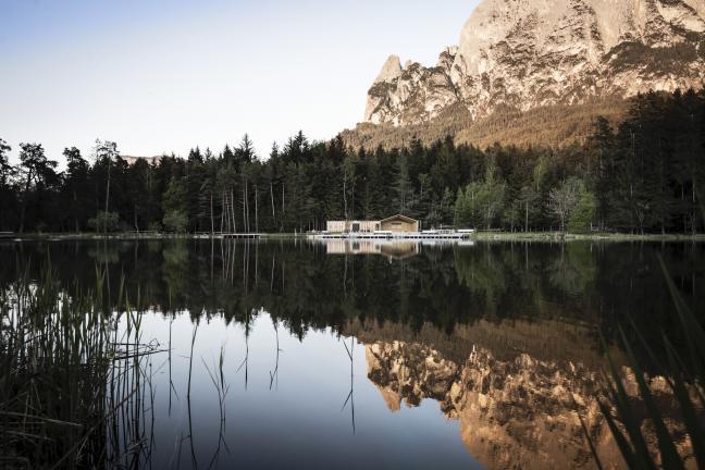 Modrzew w Tyrolu