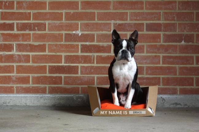 Recyklingowalne posłanie dla psa, które można złożyć na płasko
