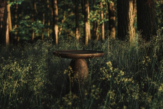 Dizajn zakorzeniony w naturze