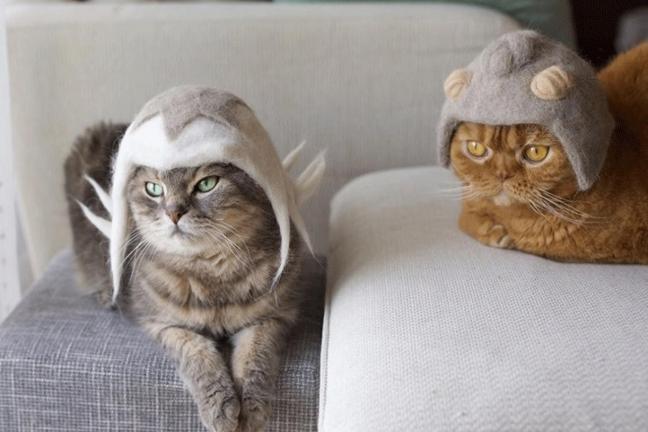 Kapelusze dla kotów wykonane z … ich własnego futra!