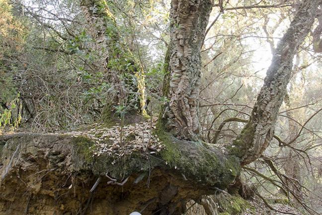 Kapsuła z drzewem alternatywą dla tradycyjnej trumny